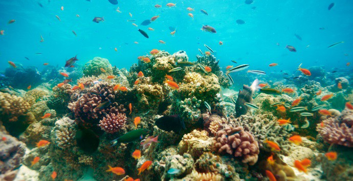Maldives Coral Restoration