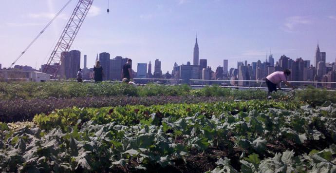 Eagle Street Rooftop Farm, Brooklyn