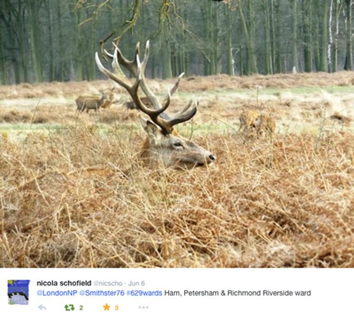 London_National_Park_tweet_richmond