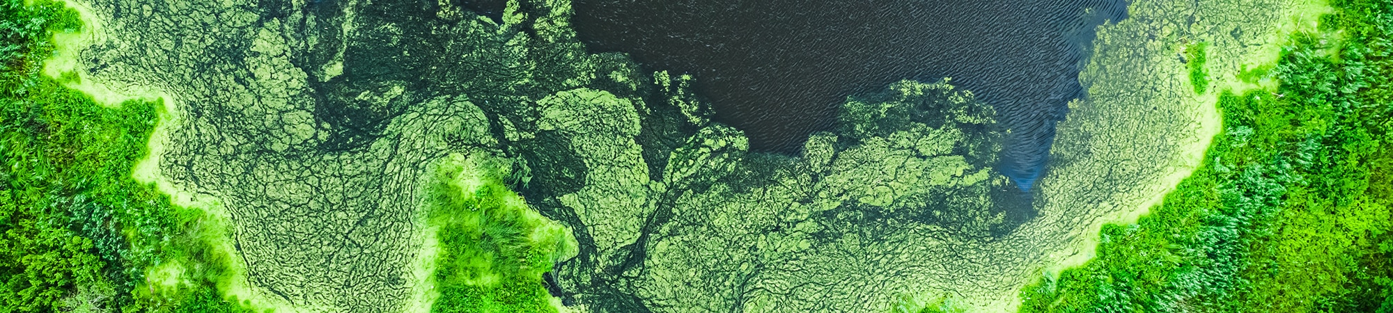 Toxic Algae Removal